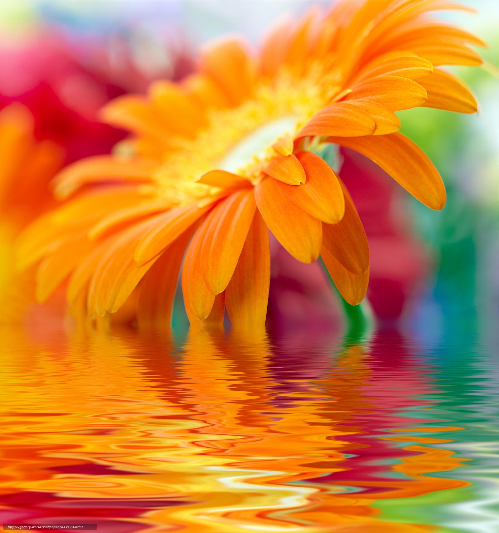 картинки цветок счастья на телефон