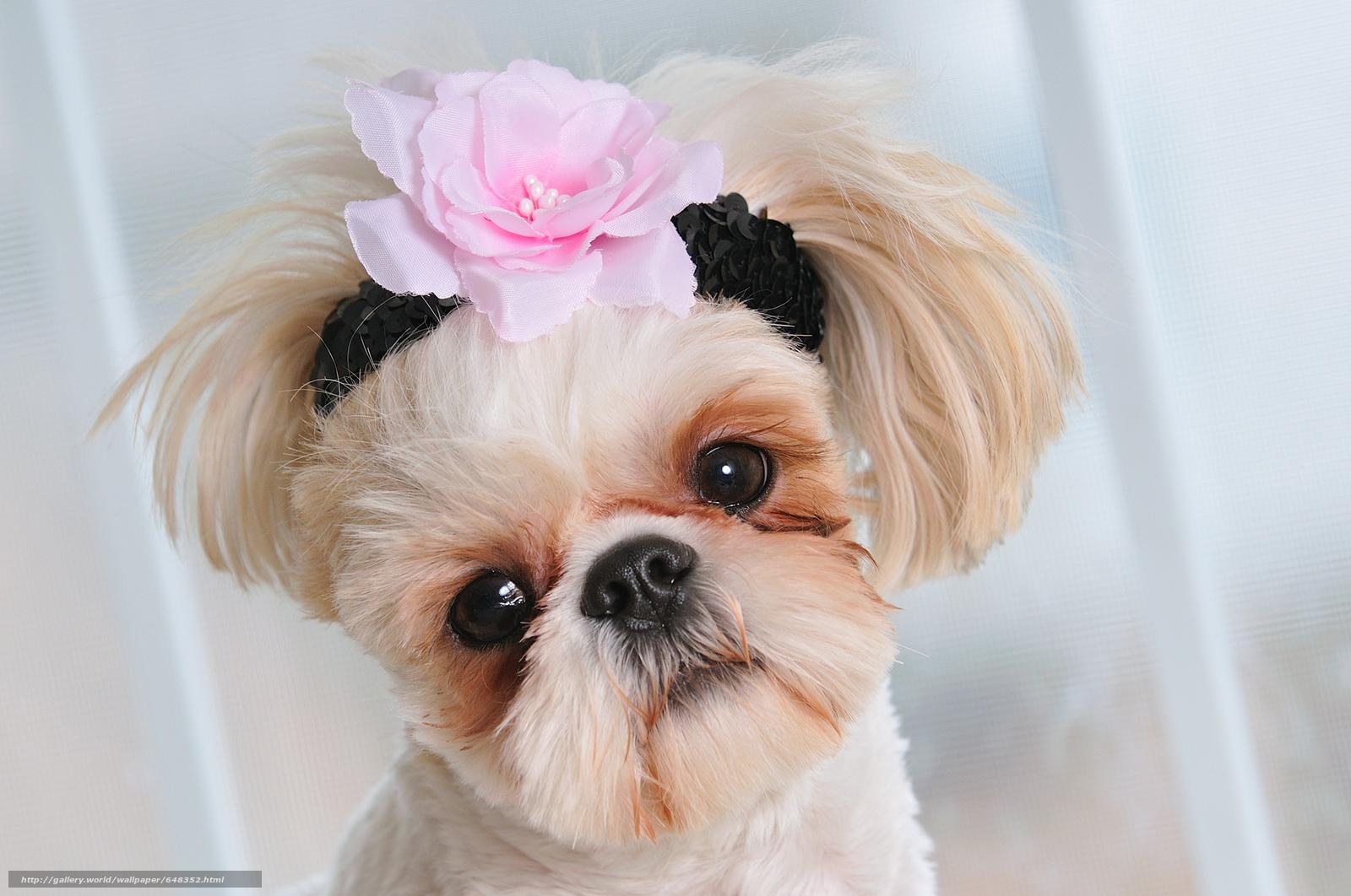 картинки няшек собачек для свадебных фотографов