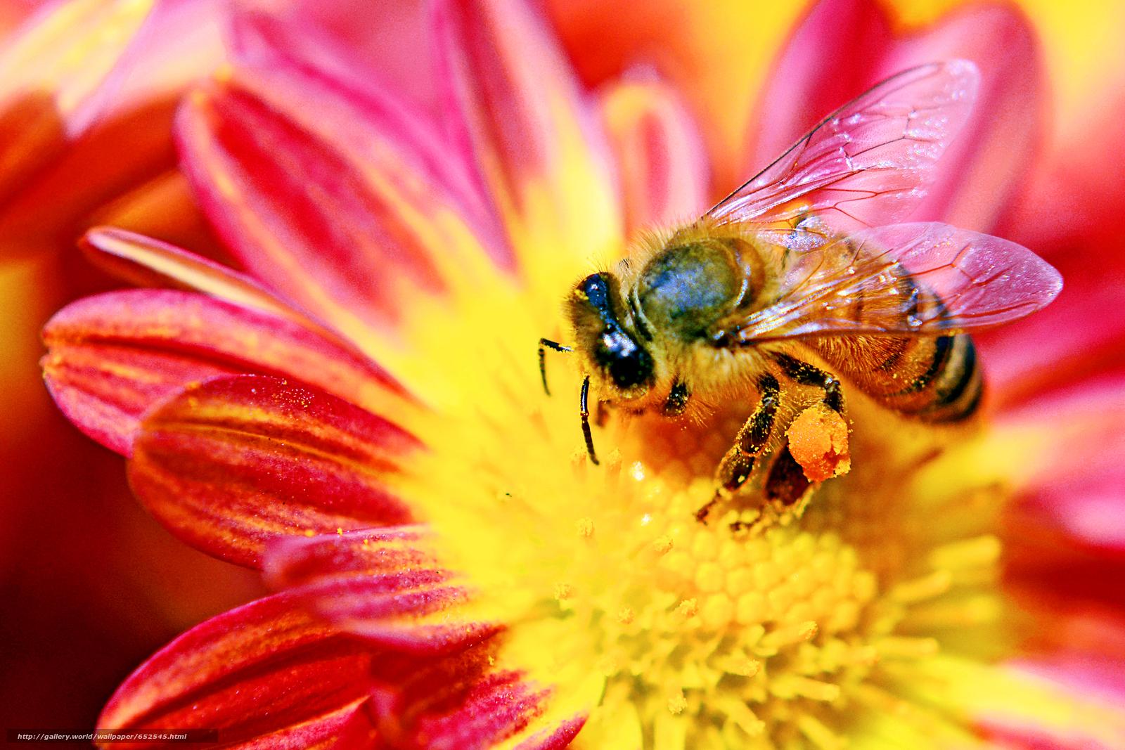 фото цветы с пчелами найдёте пошаговую инструкцию