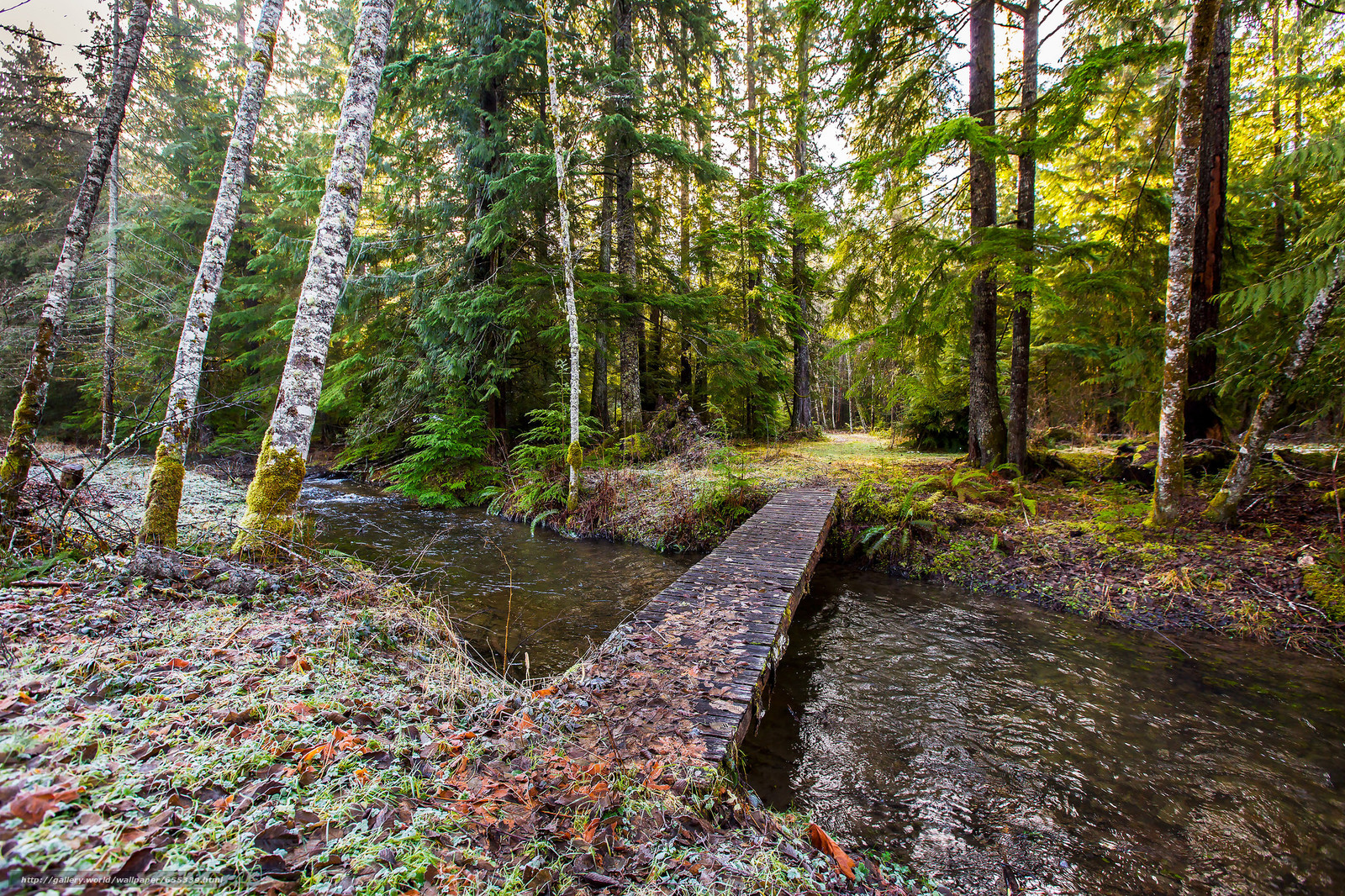 forest, small river, bridge, trees, nature