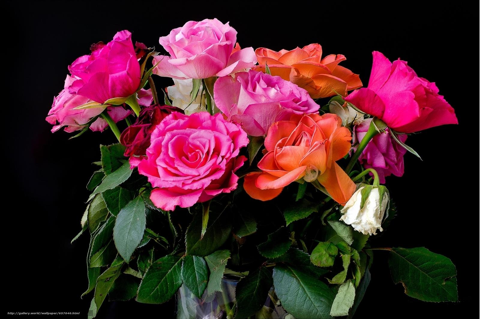 Roses, bouquet, flora
