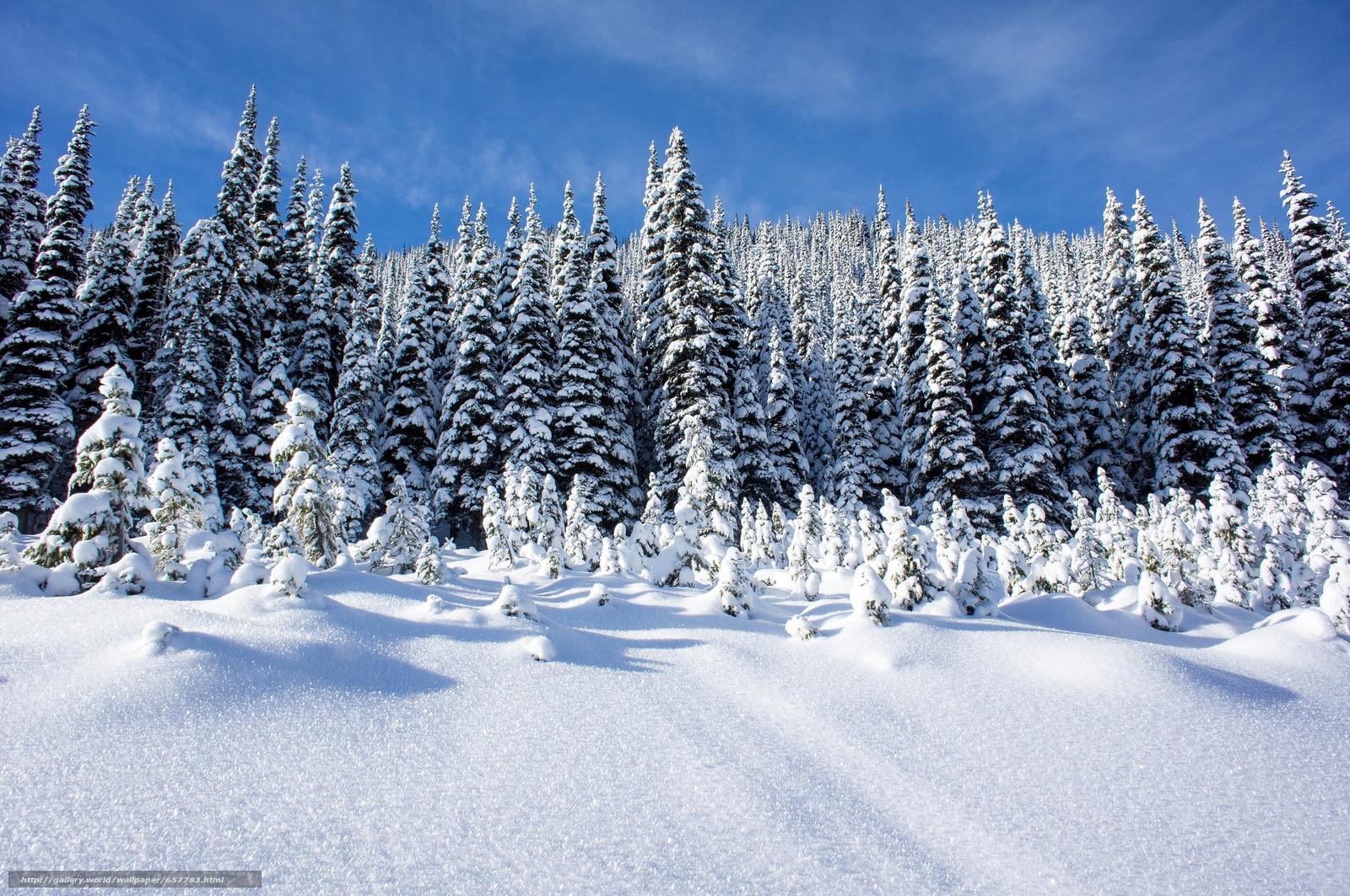 winter, snow, drifts, trees, landscape