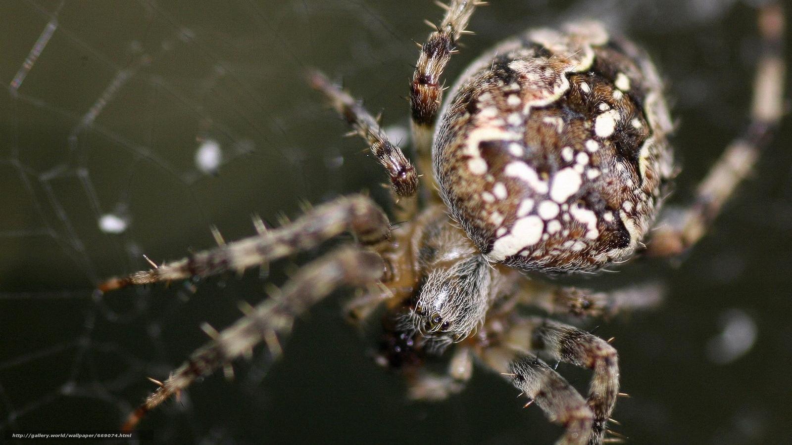 сохранилось паук с шариком на спине фото гладкая поверхность, четкость