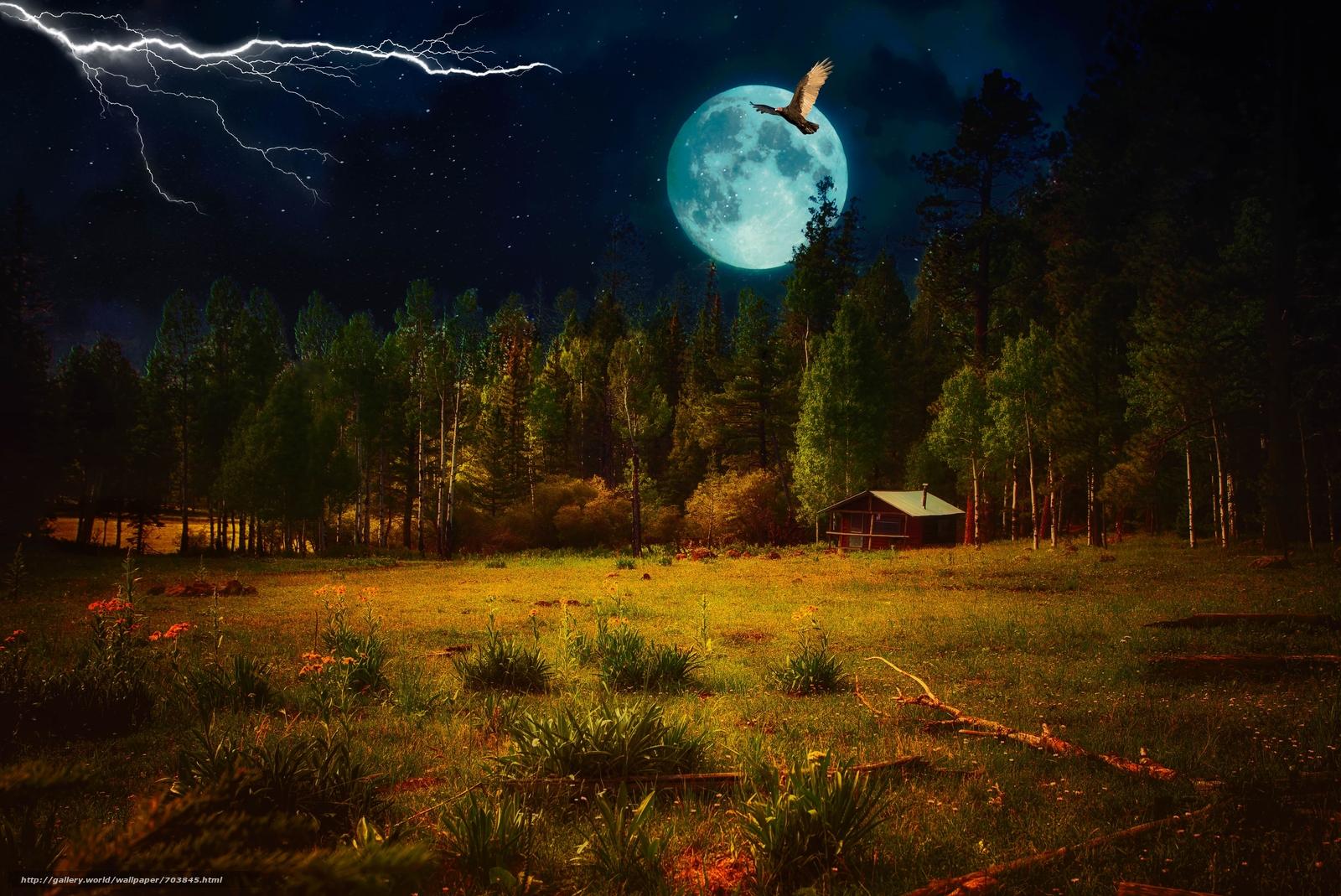 Мужчине, картинки летняя ночь в лесу
