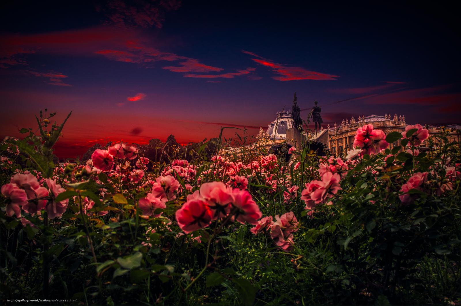 Картинки цветов настоящих закат