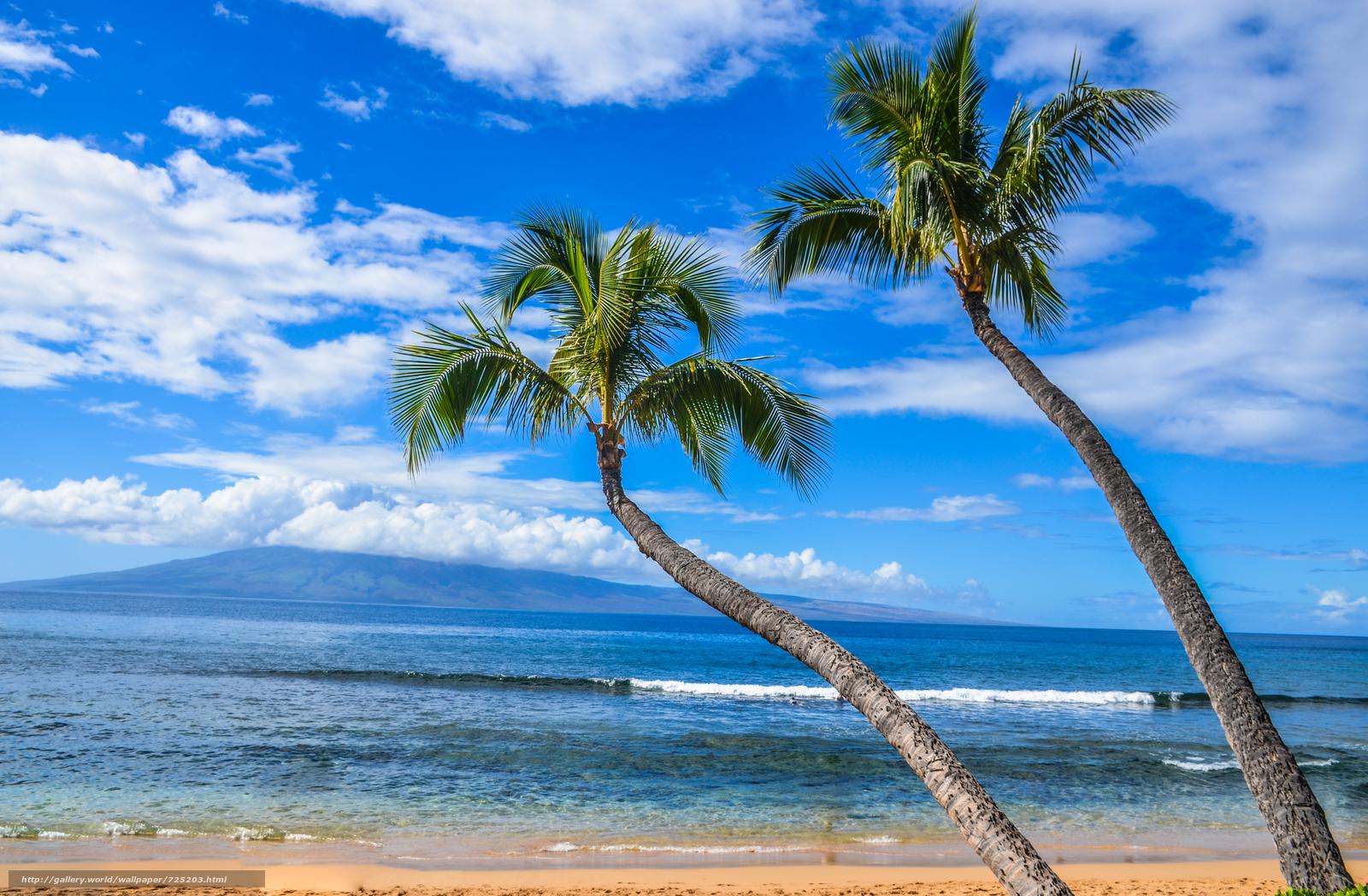 динамично картинка на сотку пальмы море состояние всегда