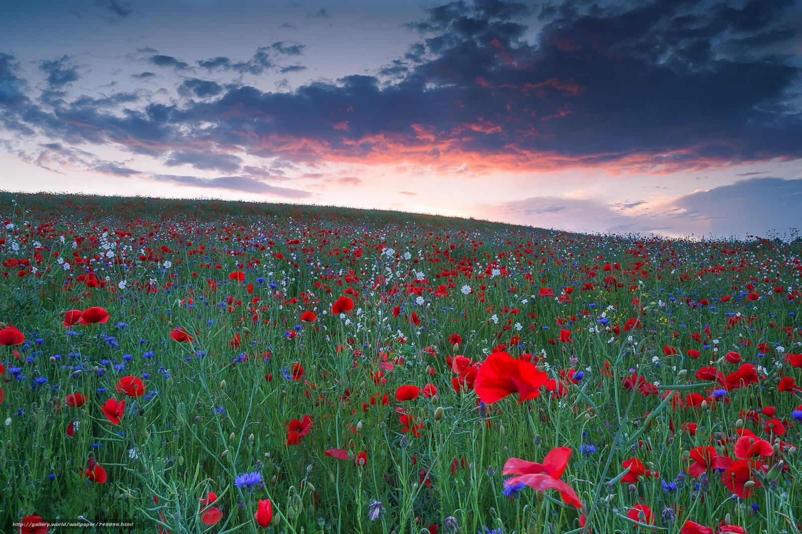 девица закате фото пейзаж поле цветы время сми