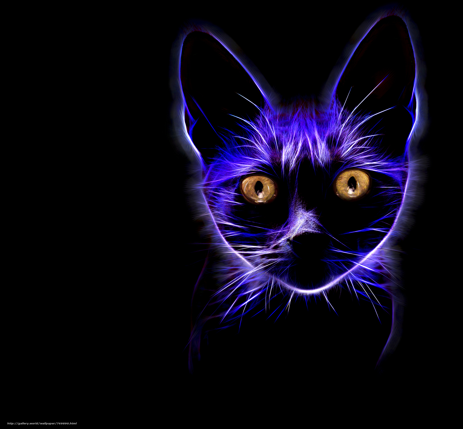 cat, cat, muzzle, Black background, abstraction