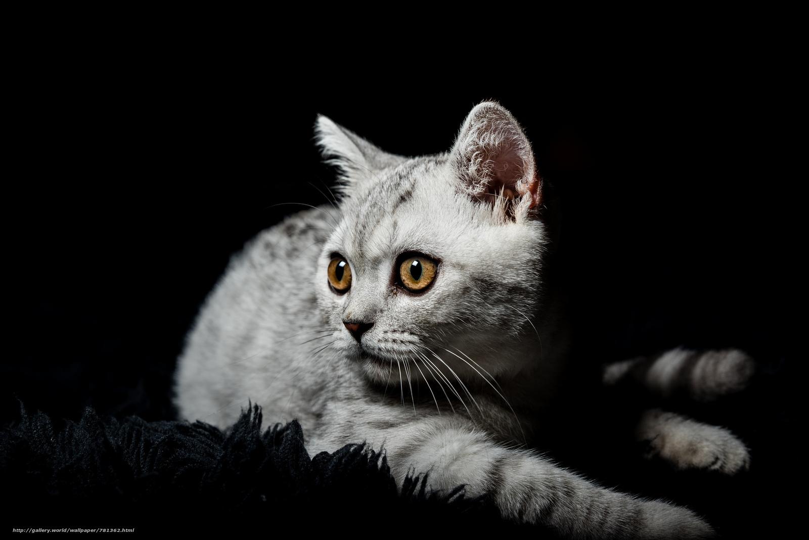 cat Kitty, sight, animal
